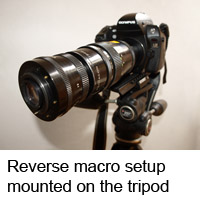 DSLR macro setup on tripod